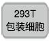 293T包装细胞
