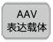 AAV表达载体